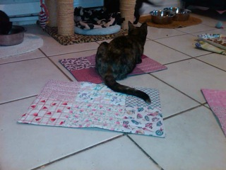 Zoey on a quilt.