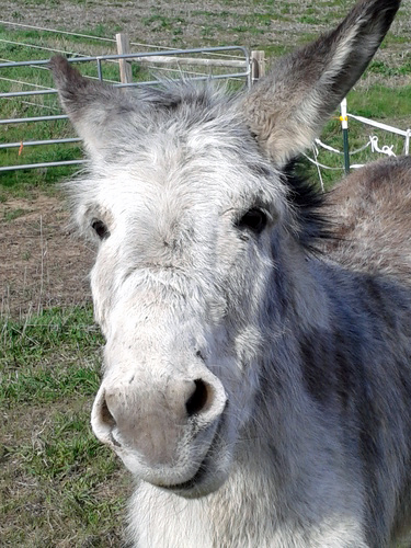 We're helping keep Storm E. the donkey cool this summer.