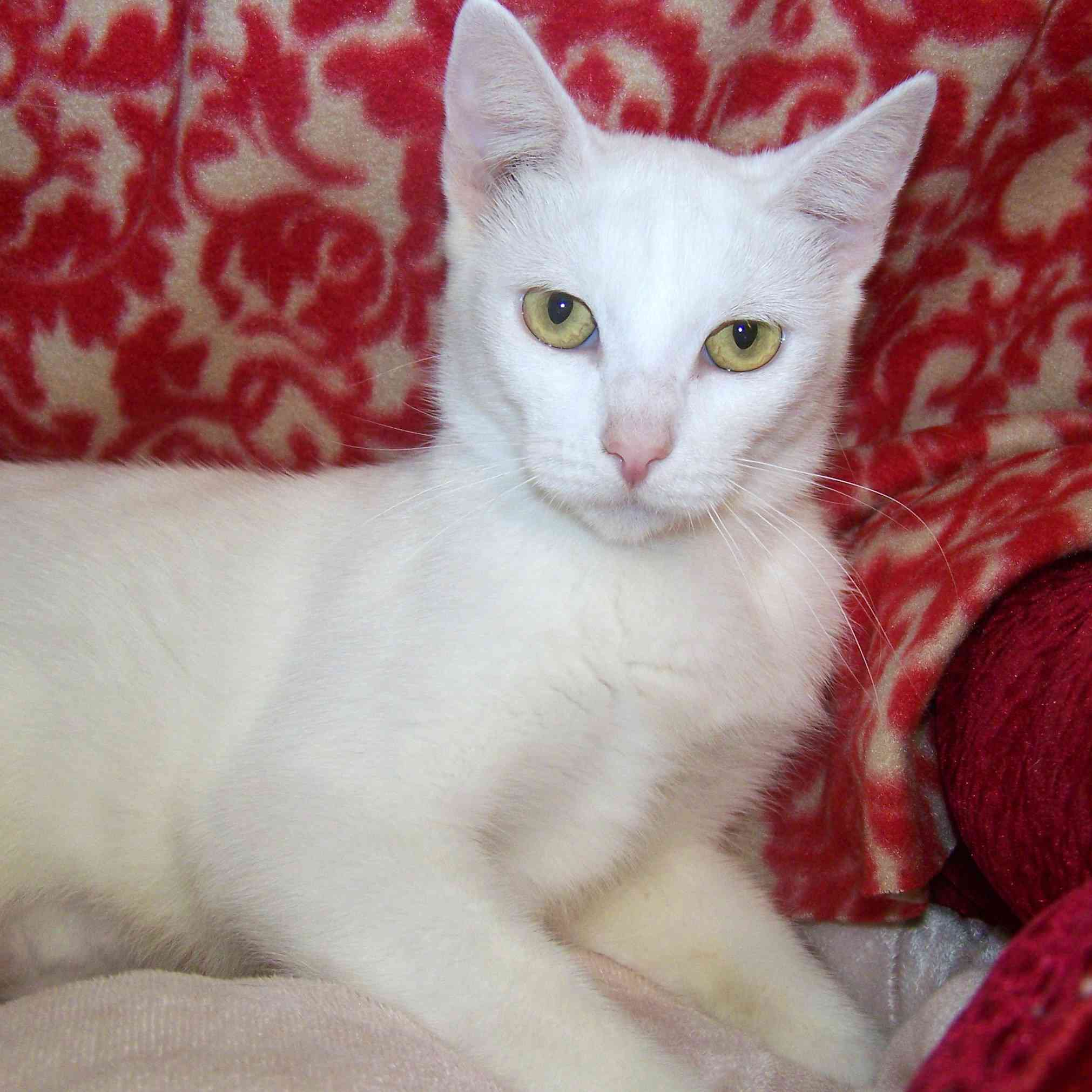 Give to us through Global Giving from 10/14-11/12 and have double the impact for homeless mother cats like Candy Cane.