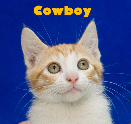 Cowboy (Photo: Cat Haven)