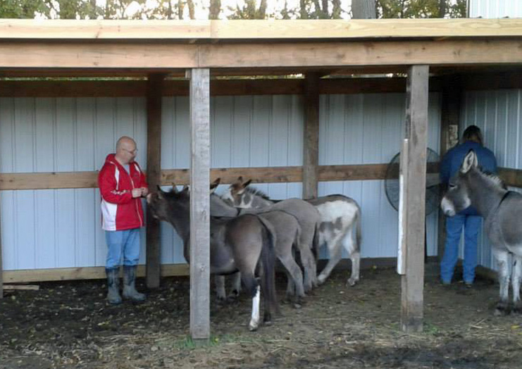 Donkeys enjoying their new multipurpose shelter