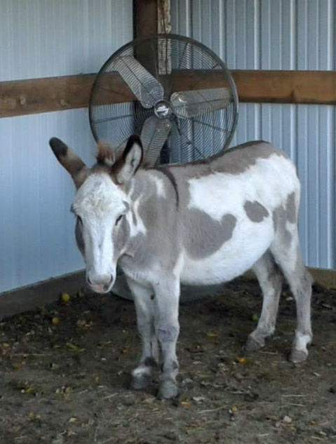 Give to us through Global Giving from 10/14-11/12 and have double the impact for homeless donkeys like Nala.