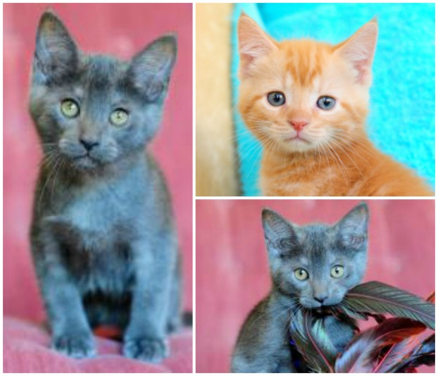 Clockwise from let, Peter, Punkin and Paul (Photo: Paws South Florida Rescue, Inc.)