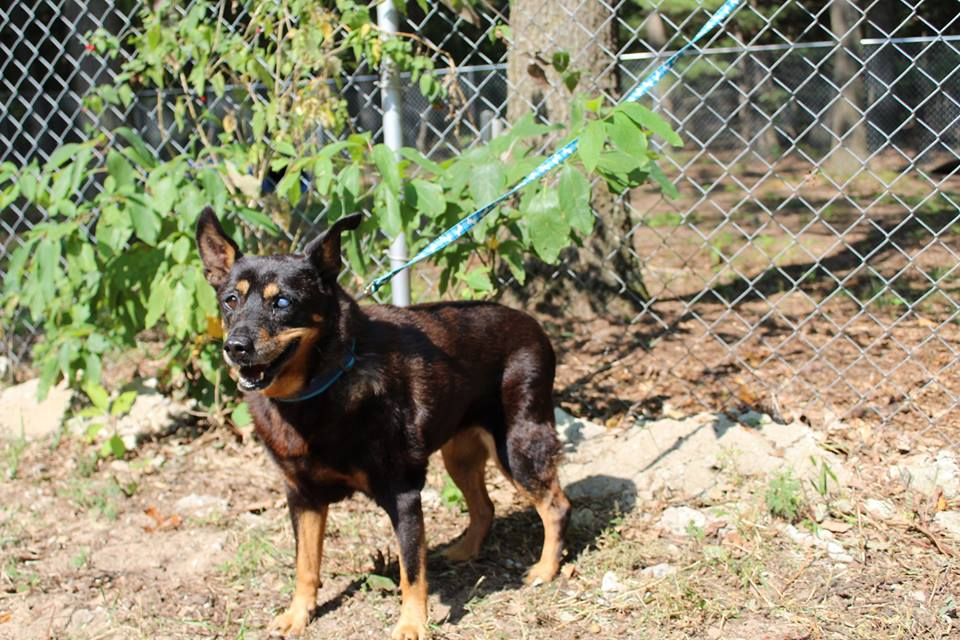 The Humane Society And Animal Rescue Of Muskegon County Senior Pet Adoption Grants Grant Report